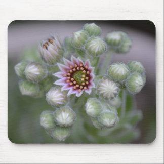 Gallina y flor de los polluelos alfombrillas de raton