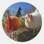 gallina y gallo pegatina redonda