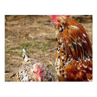 Gallina y gallo pequenos postal