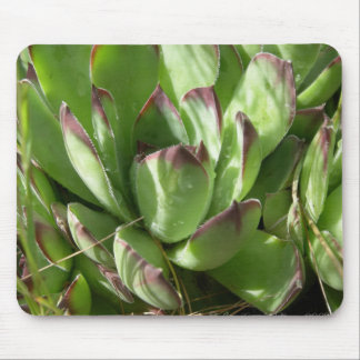 Gallina y polluelos (Sempervivum) Alfombrillas De Ratones