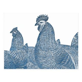 Gallinas azules del gallo de la antigüedad de los postales