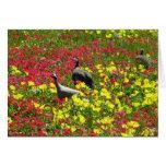 Gallinas de Guinea en los Wildflowers, primaveras  Tarjetas