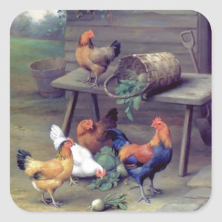 Gallinas de la cesta del nabo del gallo pegatina cuadrada