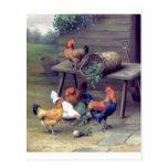 Gallinas de la cesta del nabo del gallo postal