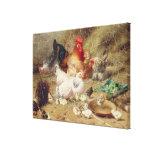 Gallinas roosting con sus pollos impresiones en lona estiradas