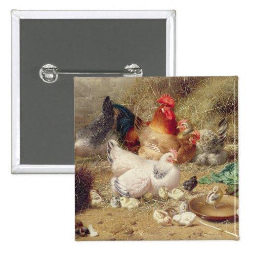 Gallinas roosting con sus pollos pin