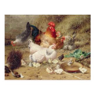 Gallinas roosting con sus pollos tarjetas postales