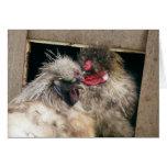 Gallinas Snuggling de los pollos de Silkie - aves  Tarjetón
