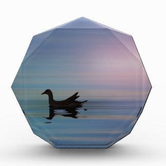 Gallinule Smooth Acrylic Award