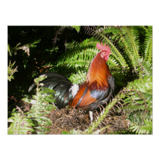 Gallo - aves de selva roja póster