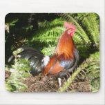 Gallo - aves de selva roja tapete de raton