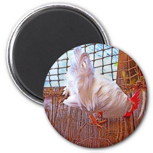 gallo blanco en hdr del muelle imán redondo 5 cm