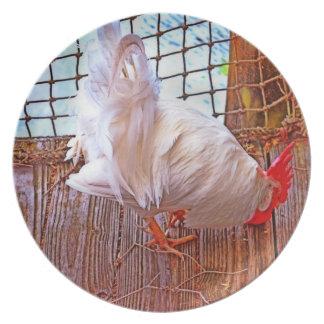 gallo blanco en hdr del muelle platos de comidas