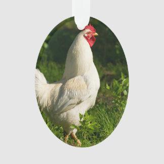 Gallo blanco en hierba alta