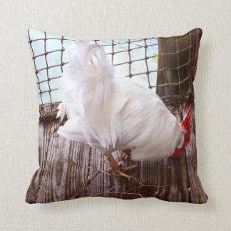 gallo blanco en la consumición del muelle cojin