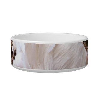 gallo blanco en la consumición del muelle tazón para gato