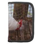 gallo blanco en la consumición del muelle planificadores