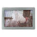 gallo blanco en la consumición del muelle hebillas de cinturon rectangulares