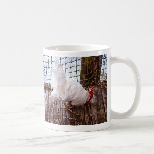 gallo blanco en la consumición del muelle taza de café
