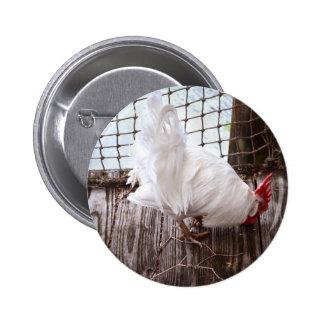 gallo blanco en muelle pin redondo de 2 pulgadas