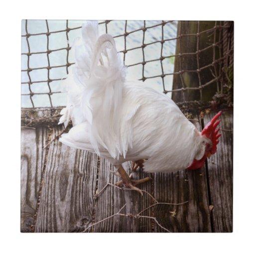 gallo blanco en muelle teja  ceramica