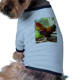 Gallo colorido camisetas de mascota