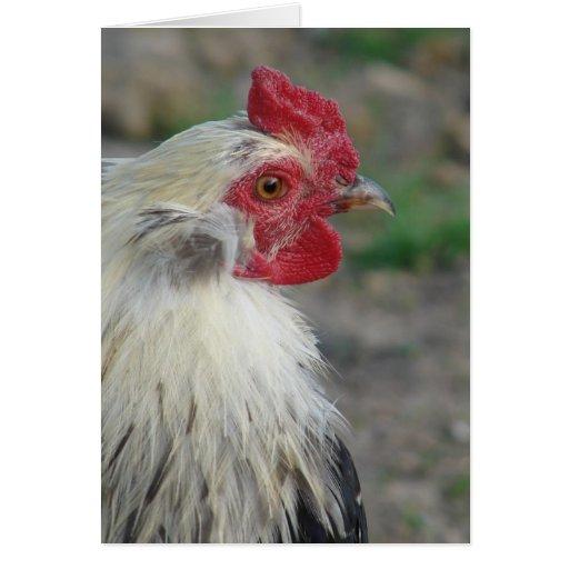 Gallo de Araucana Tarjetas