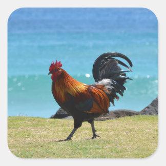 Gallo de Kauai Calcomanía Cuadrada