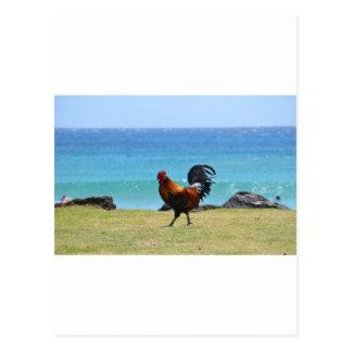 Gallo de Kauai Postal