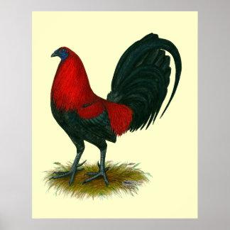 Gallo de pelea americano:  Rojo de Brown Póster