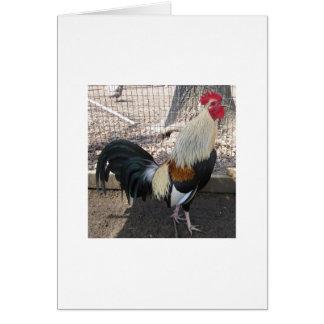 Gallo de pelea gris de cacareo tarjeta de felicitación