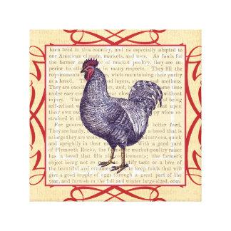 Gallo de Plymouth Rock de la elegancia de la cocin Impresiones En Lona Estiradas
