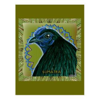 Gallo de Sumatra enmarcado Tarjetas Postales