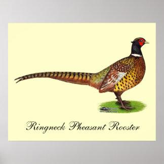 Gallo del faisán de Ringneck Póster