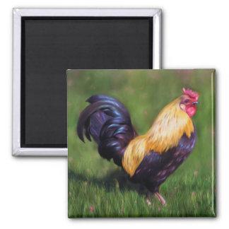 Gallo del gallo de Estuardo del arte del pollo Imanes De Nevera