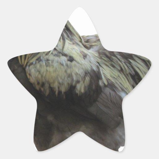 Gallo del país pegatina en forma de estrella