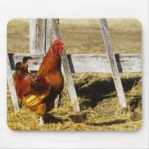 Gallo del rojo de Rhode Island Tapetes De Raton