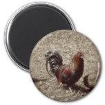Gallo del rojo del vintage iman