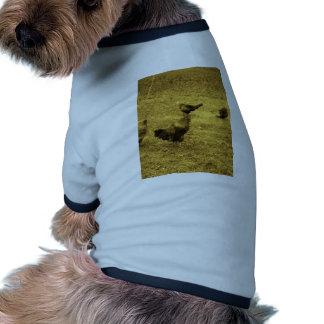 Gallo del tono de la sepia en la yarda camisetas mascota