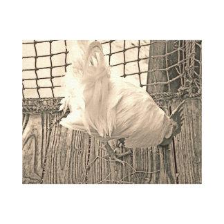 gallo en imagen del pájaro de la sepia del muelle lona envuelta para galerías
