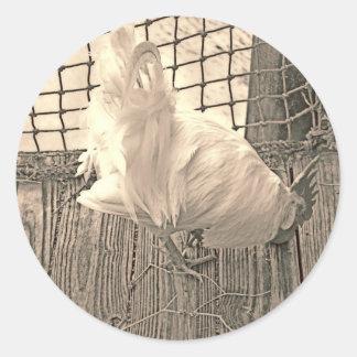 gallo en imagen del pájaro de la sepia del muelle pegatinas redondas