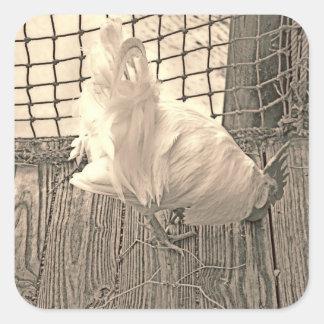 gallo en imagen del pájaro de la sepia del muelle colcomania cuadrada
