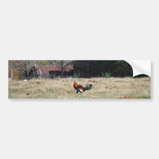 Gallo en la foto de la granja de Sandy Closs. Pegatina Para Auto