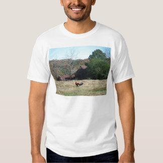 Gallo en la foto de la granja de Sandy Closs. Camisas
