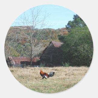 Gallo en la foto de la granja de Sandy Closs. Pegatina Redonda