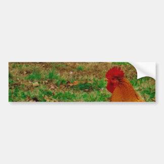 Gallo en la yarda etiqueta de parachoque