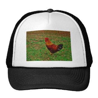 Gallo en la yarda gorras