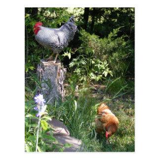 Gallo en los jardines postales
