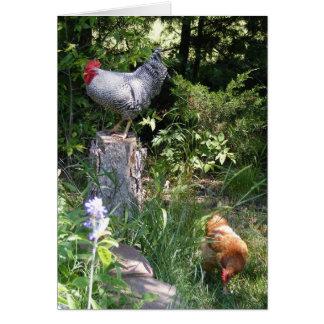 Gallo en los jardines tarjeta de felicitación