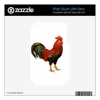Gallo rojo de la Leghorn iPod Touch 4G Calcomanía